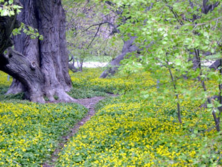 arboretum: