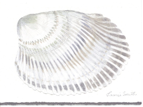 Laurie Card Seashell