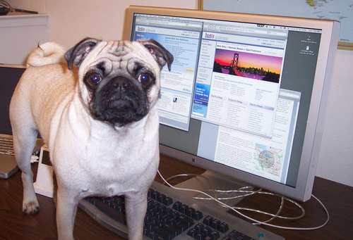 Sheba and the new Justia Law Firm Web Site Design Web Site